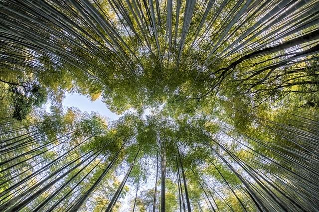 טיול ליפן למשפחות- יער הבמבוקים