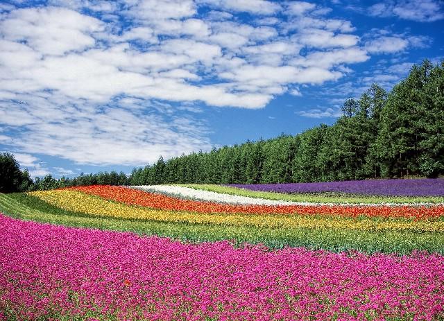 טיול ליפן הוקאידו, פריחה בפוראנו