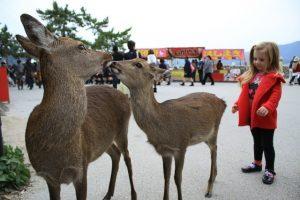 טיול ליפן עם ילדים, איילים בנארה