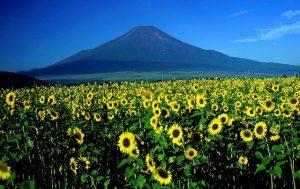 טיולים ביפן נהיגה עצמאית באלפים היפנים