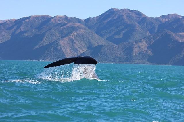 טיול לניו זילנד שייט לוויתנים בקאיקורה