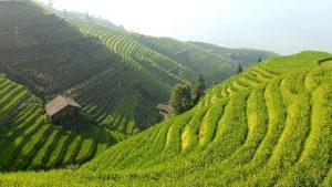 טיול לסין טרסות האורז