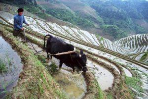 טיול לסין, טרסות האורז לונגשנג