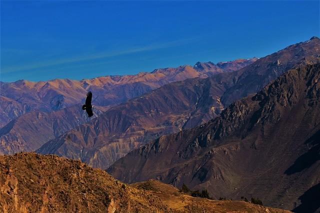 טיול לפרו, קניון קולקה, מעוף הקונדור