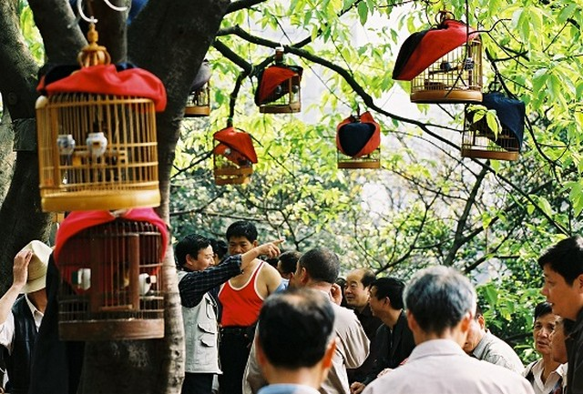 טיול לסין, מגדלי ציפורים בצ'ונגצ'ינג