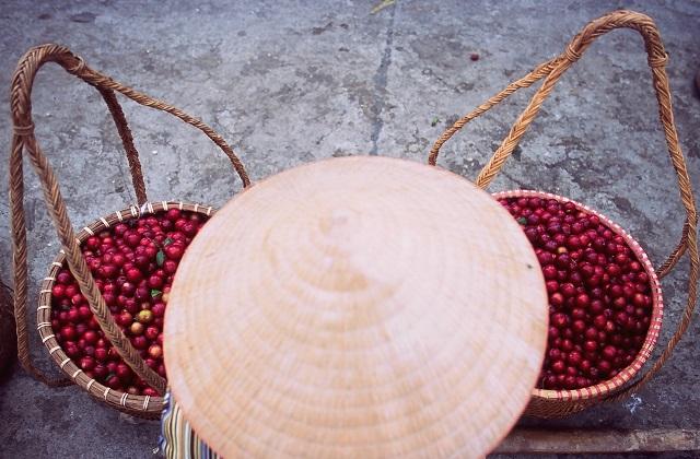 טיול בקמבודיה וויאטנם, שוק הוי אן