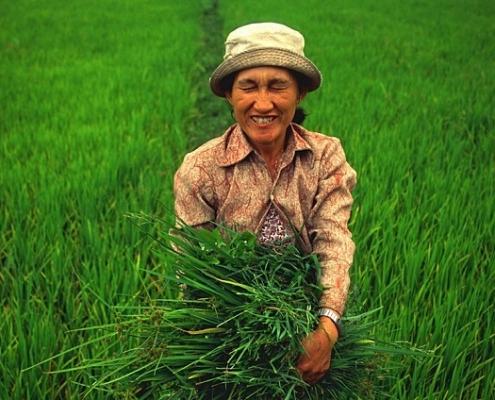טיול לוייטנאם, שדה אורז בהוי אן