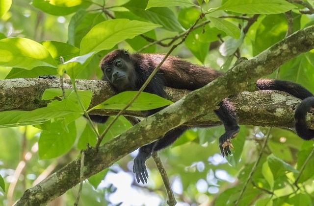 קופים באמזונס