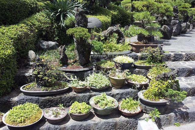 גן בוטאני, האי ג'הג'ו, טיול לקוריאה