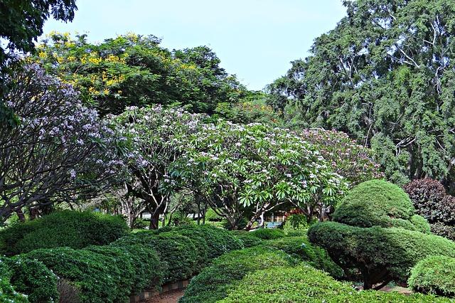 הגנים הבוטנים בבנגלור, טיול לדרום הודו