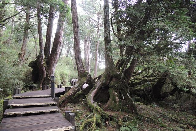 יער בטאיוון