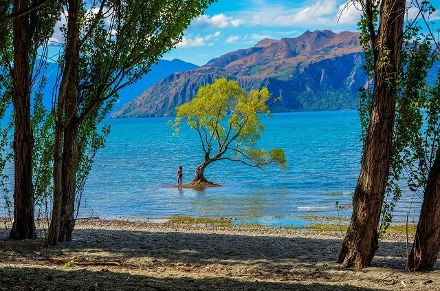 אגם וואנקה, טיול לניו זילנד