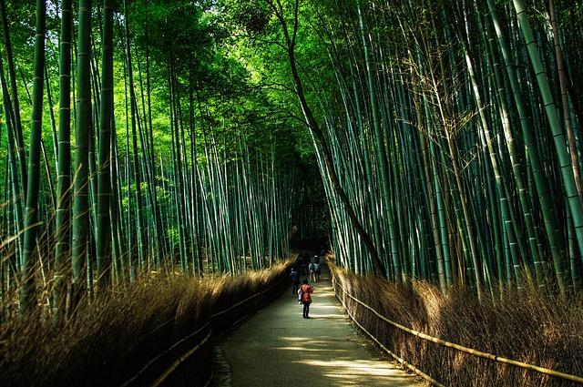 יער הבמבוקים, קיוטו, טיול ליפן