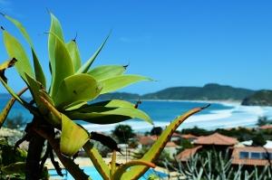 בוזיוס, חופי ברזיל